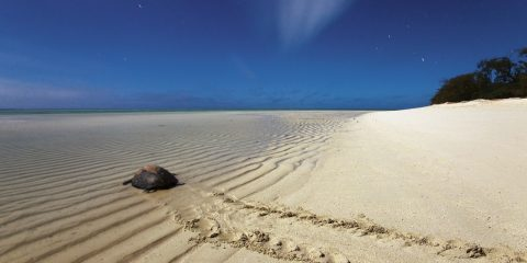 Waiting for the turtles, a moment from Heron Island