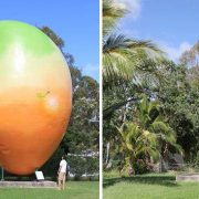 big mango in Bowen missing